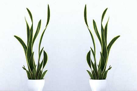 Welche Pflanzen Eignen Sich Furs Schlafzimmer Keno Kent Blog