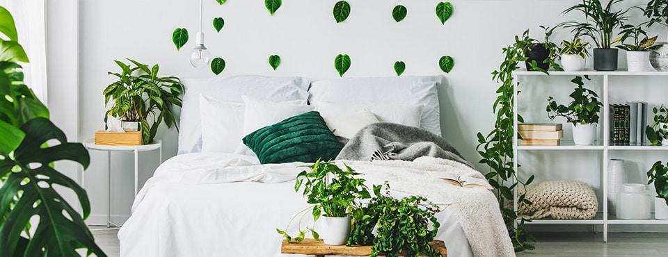 Welche Zimmerpflanzen eignen sich im Schlafzimmer? - Keno ...