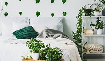 Welche Zimmerpflanzen eignen sich für das Schlafzimmer? - Keno Kent